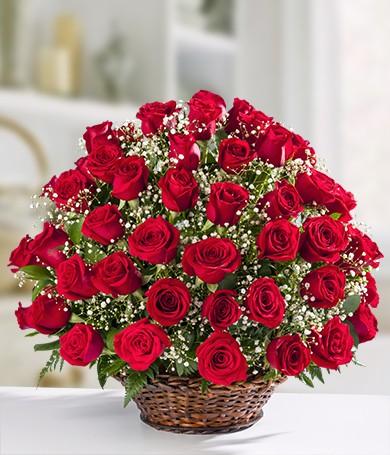 Rose Serenade