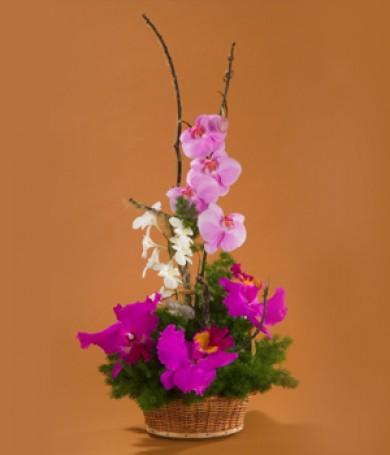 Sólo Orquídeas