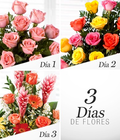 Three Days of Flowers