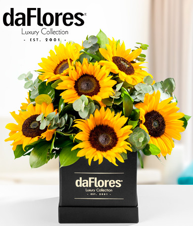 Sunflowers in a Black Box