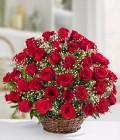 Serenata de Rosas